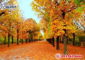 Tour  Du Lịch Hàn Quốc 5 Ngày 4 Đêm Bay Jeju Air/Jinair - Mùa Thu lá vàng lá đỏ