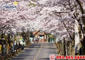 Tour  Du Lịch Hàn Quốc 5 Ngày 4 Đêm Mùa Hoa Anh Đào - Khách sạn 4*