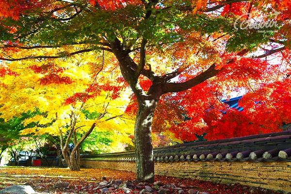 Kết quả hình ảnh cho seoul mùa lá đỏ